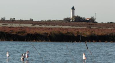 Étang et phare de la Gacholle. Le delta de la Camargue, dont 70 % est situé à moins d'un mètre d'altitude, voit déjà se produire les effets du changement climatique. © P. Isnard-Dupuy