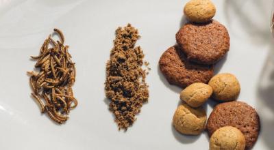Sablés aux ténébrions proposés par la société française Micronutris - Crédit : Micronutris