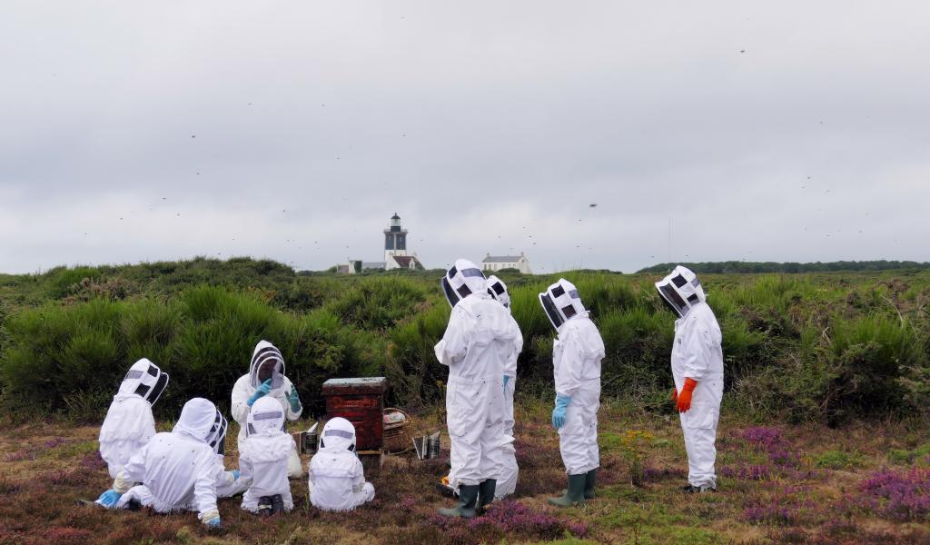 Visite pédagogique des ruches d'abeilles noires. Crédit photo: ASAN.GX