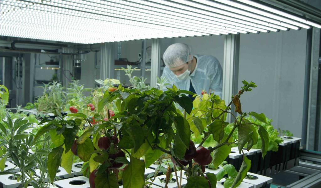 Entretien des plantes dans la Ferme urbaine lyonnaise (FUL) - FD