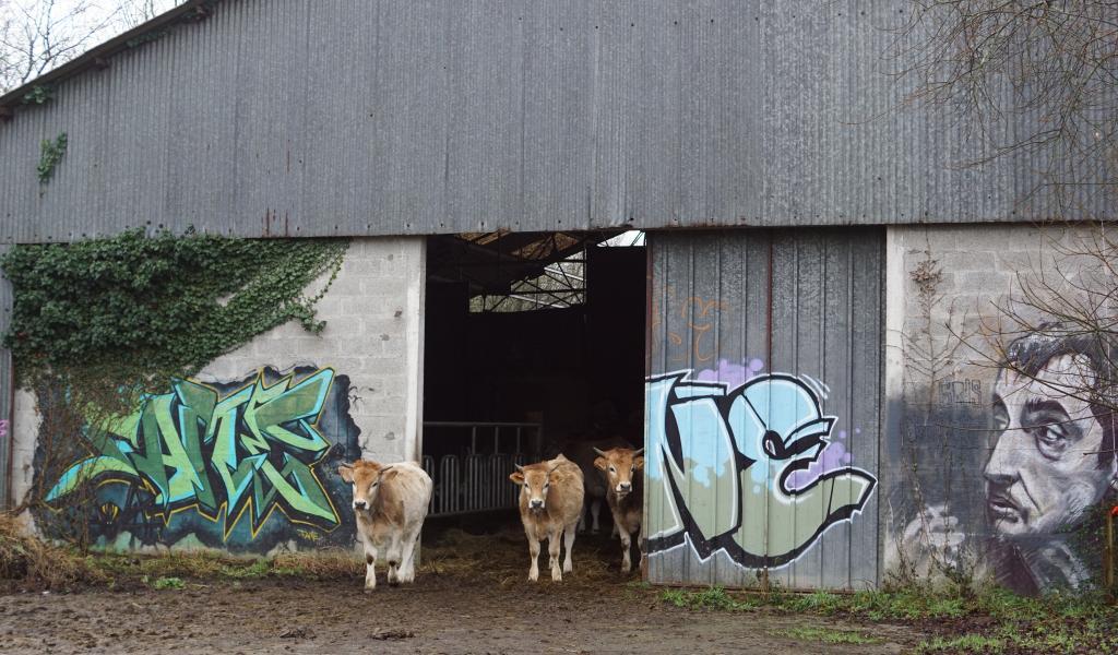 Un petit troupeau de vaches nantaises, élevées pour leur viande, pâturent sur la friche et quelques champs alentours. © B. Vandestick