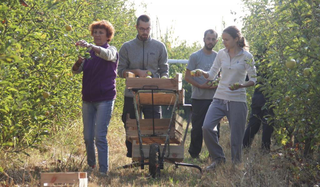 Depuis mars 2017, plus de 300 personnes ont participé aux activités de Partage d'amour : récolte, transformation ou vente entre adhérents. © E. Besatti
