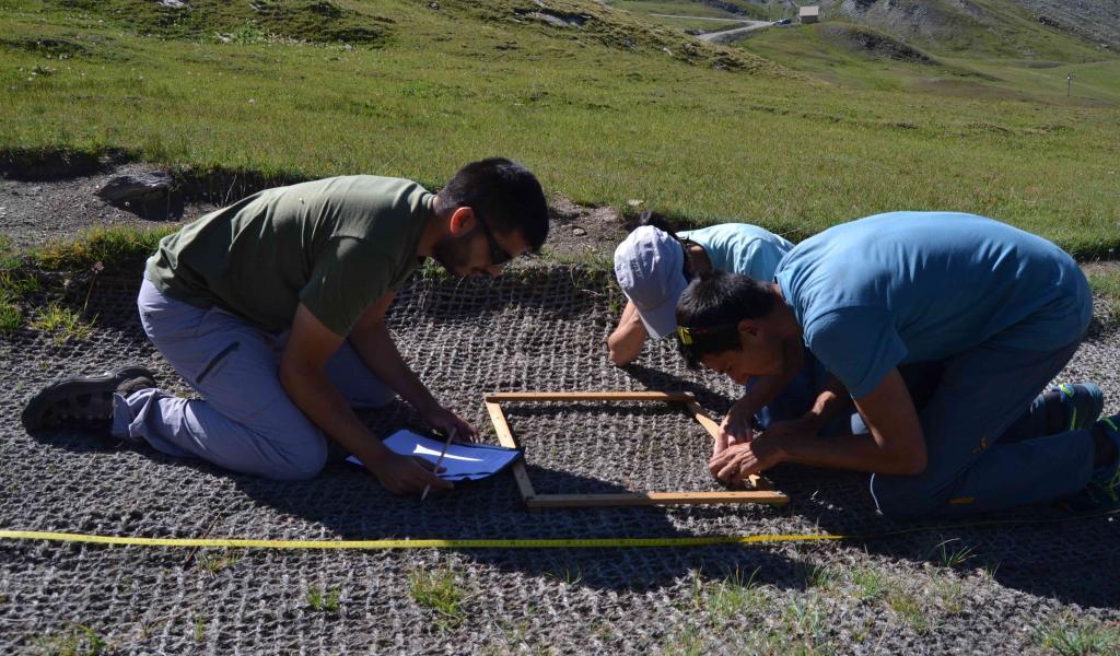 Un suivi post-revégétalisation a été réalisé au col Agnel dans le cadre de Sem'Les Alpes, afin de mesurer le taux de recouvrement de la végétation. © S. Huc