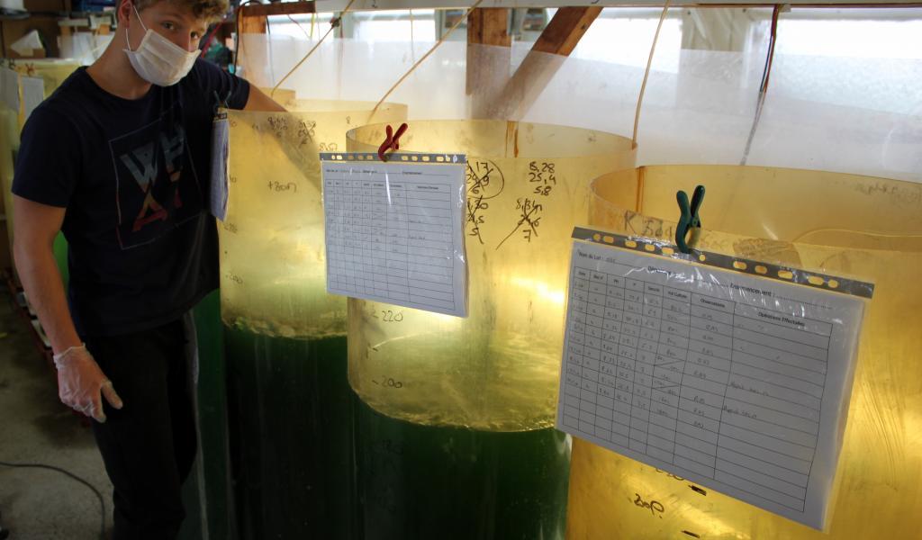 Maxime, fils de Marie-Gabrielle et chargé de production, vérifie la température et le pH de l'eau de culture de la spiruline marine. Redécouverte dans les années 1960, cette cyanobactérie est apparue il y a trois milliards d'années dans les eaux tièdes de lacs alcalins. © S. Bju
