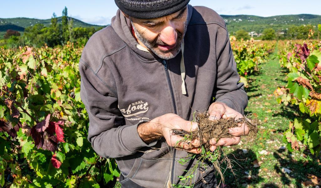 Un sol vivant est grumeleux, odorant et traversé de nombreuses racines. Ces sols non tassés sont plus favorables à la pénétration de l'eau (crédit : Anaïs Marechal).