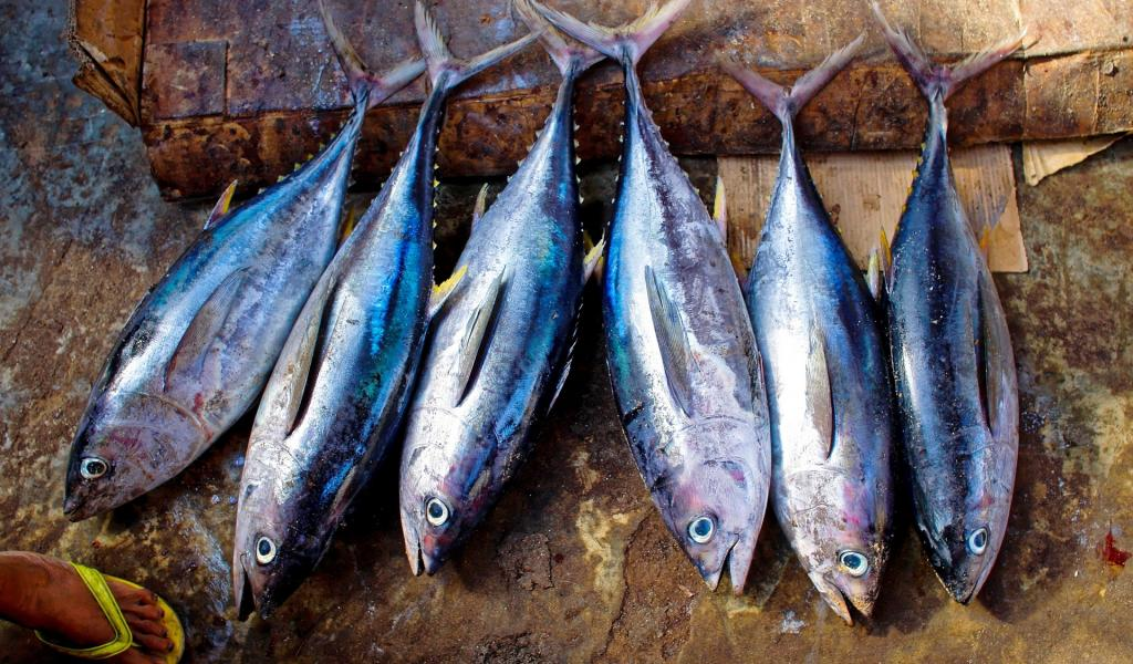 Pêche de thons. Crédits : Pixabay
