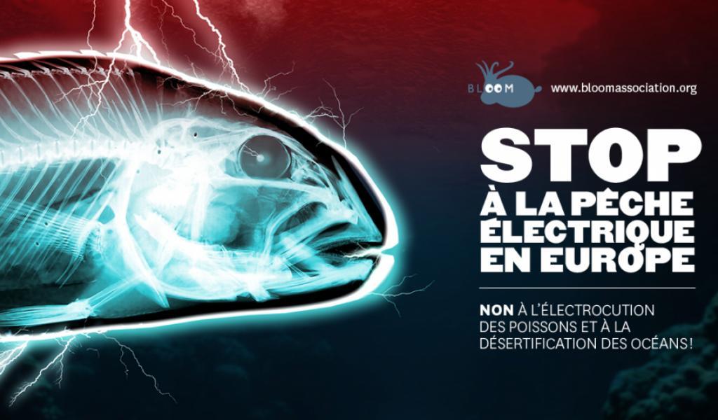 Pétition de l'association BLOOM contre la pêche électrique. ©BLOOM