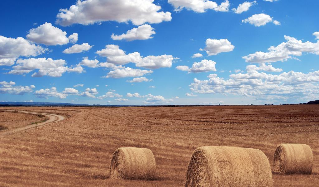 Accaparemment des terres agricoles (crédit : Pixabay)